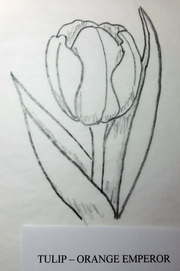 tulip woodcarving pattern
